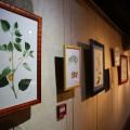 Exposition Botanique par Louise