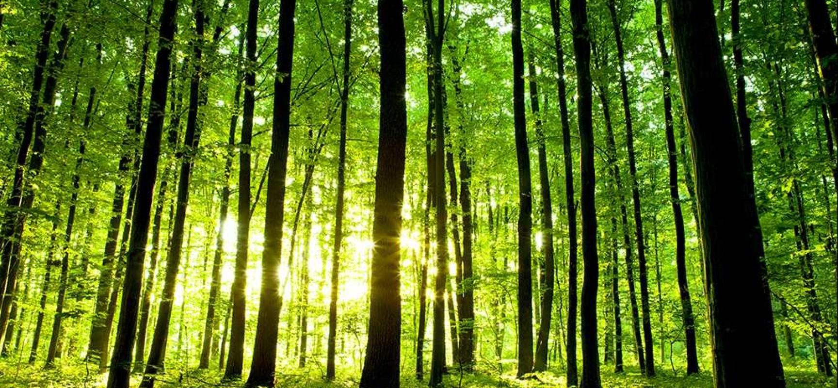 Donnez-nous votre avis sur la forêt !
