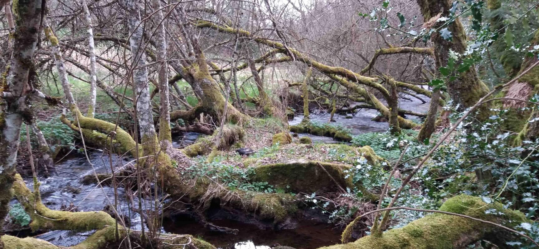 Causerie sur les forêts à la médiathèque de Felletin