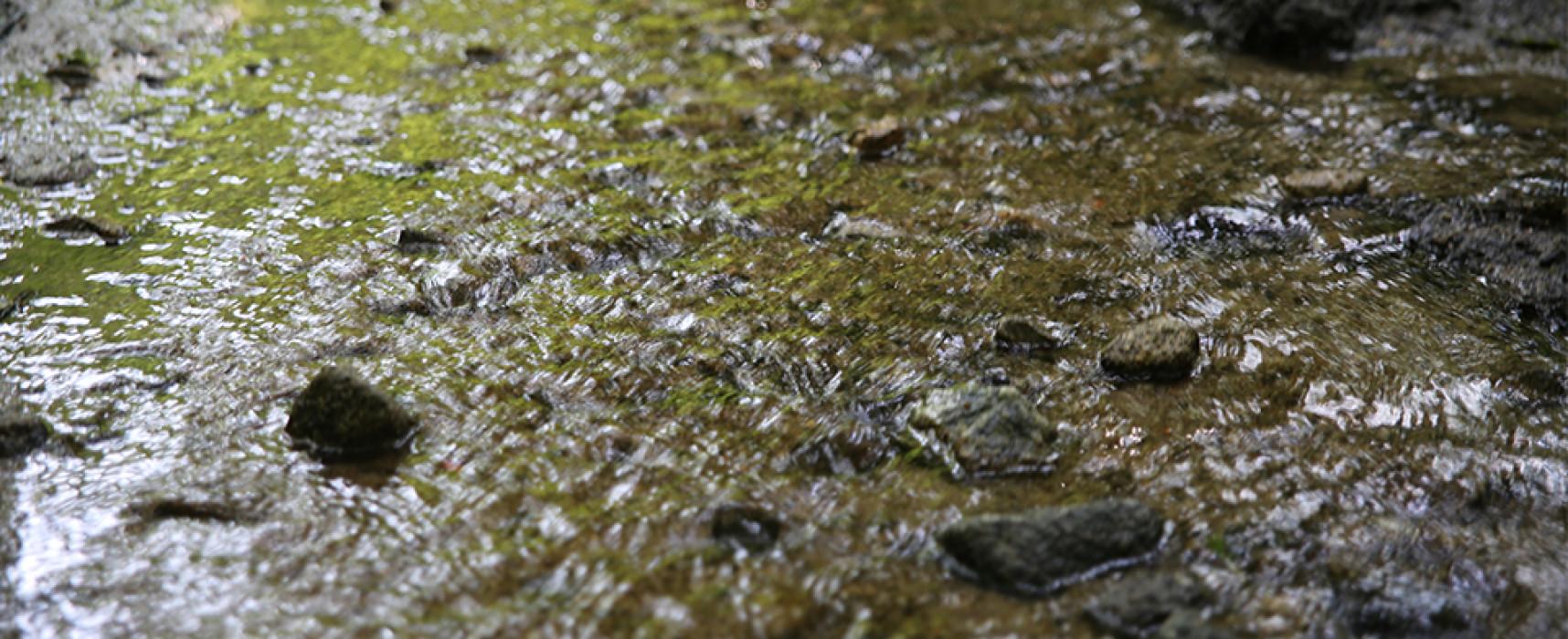 Le Service Environnement travaille à la mise en œuvre de la GEMAPI* notamment par la restauration des cours d'eau et des zones humides
